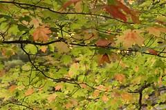 Leafy beauty along the hiking trail