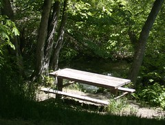 Squirrel on Bench in City Creek Canyon