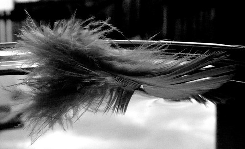 Floating Feather 3
