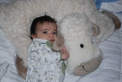 2 months old with the sheep