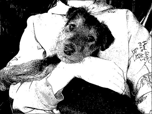 Second child and Crispin as a pup