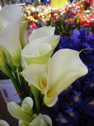 Lovely Callas