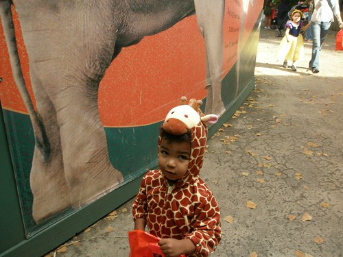 Giraffe on the loose at the zoo!