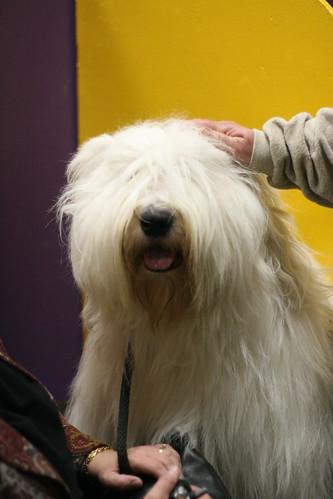 Dog Show 003