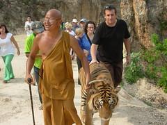 Roo walks Wan the tiger
