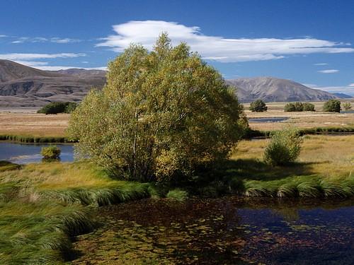 Ben Avon Scenic Reserve
