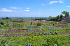 080519-allotment486