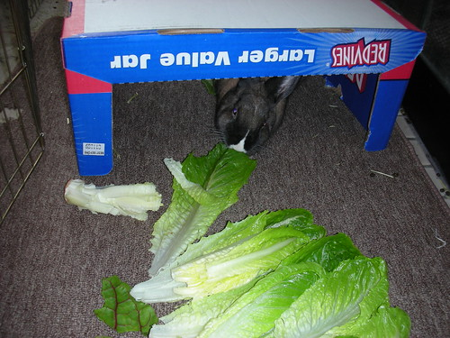 Maybe I can come out for Romaine