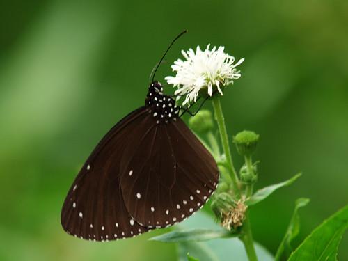 butterfly_20071013_03.jpg