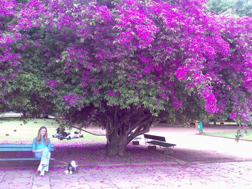 Porto Flor