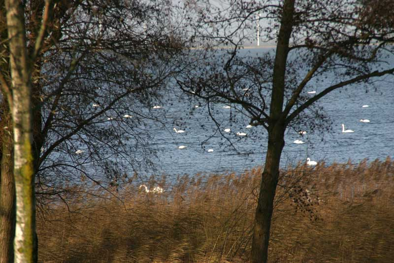 thuis01-IMG_8426
