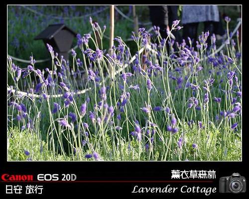 LavenderCottage_0119