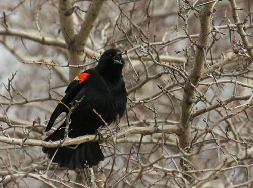 BLACKBIRDS - Definido con Recetas | Archivos de GG