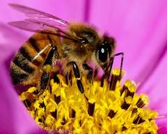 Bee Antena!