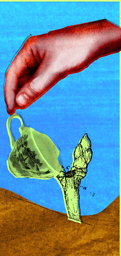 teapicking