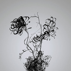 plant 9579