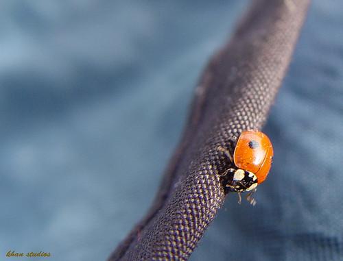 first bug