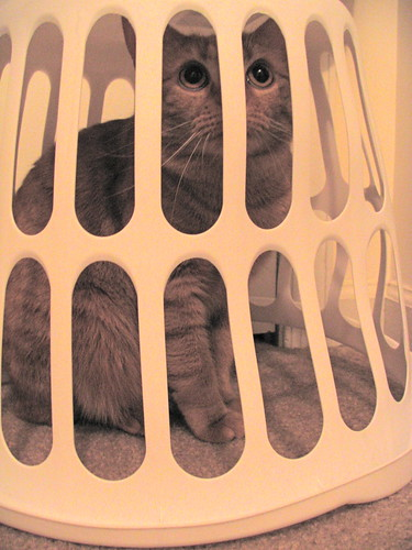 Trapped Cat