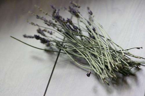 Lavender loose