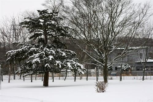 White & cold Hokkaido