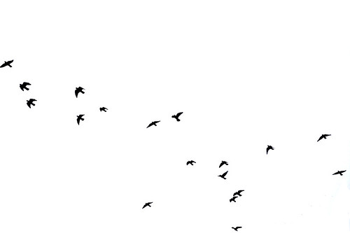birds flying high, you know how i feel