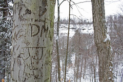 Graffiti Tree