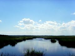 Cumberland Marsh