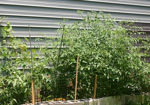 garden625 008