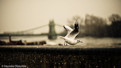 Hammersmith Bridge Riverside