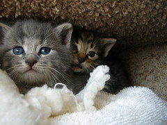 huddled up kitties