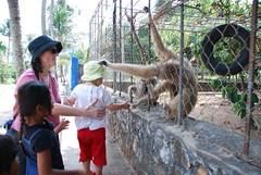 'Cheeky monkey take Tash's hat'
