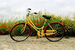 frikkettone bike