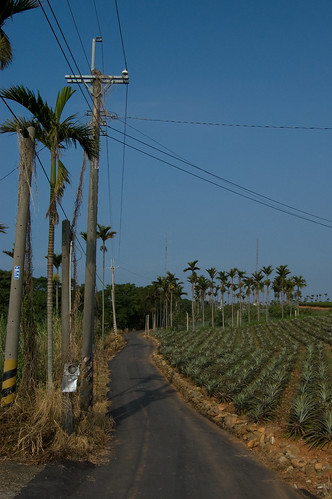 Pineapple farms