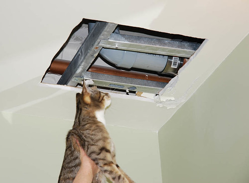 Showing kitteh the ceiling hole.