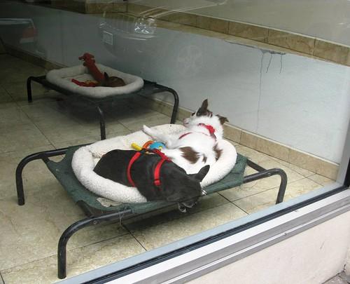 Nap Time at the Dog Spa