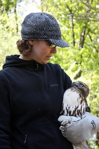 This is me, having a little chat with the red-tailed hawk Im about to release.  Photo by Julie Staub.
