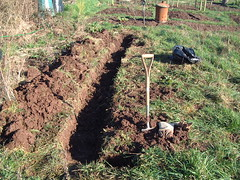 080209-allotment086