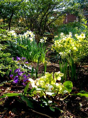 Springtime Woods