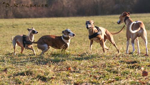 Pansy, Nala, Joey und Marley unterwegs