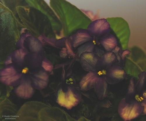 violetpainting