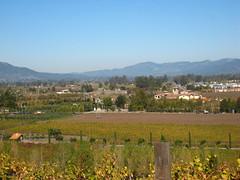 View from Viansa Winery Photo