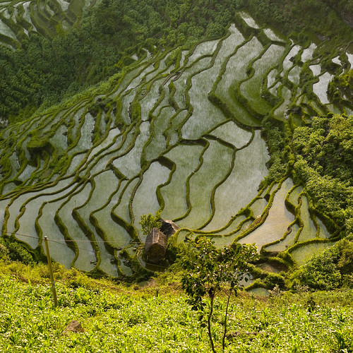 China  Yunnan, terraced field