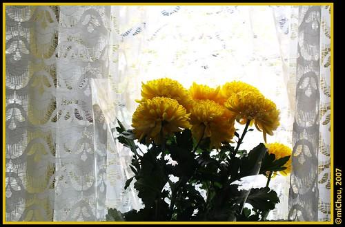 Crizanteme