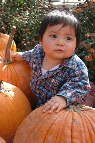 Obligatory Pumpkin Patch Picture No. 3