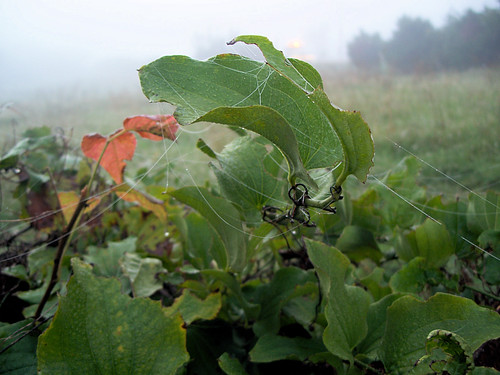 leaves and web.jpg
