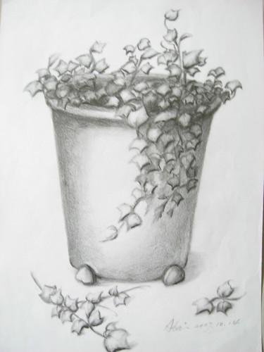 �泰的素描盆栽