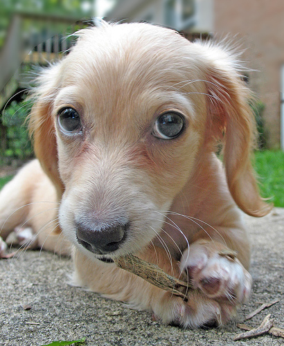 perro royendo hueso
