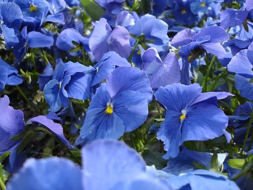 Flores azules en la tarde de Alcalá
