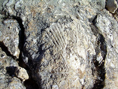 Fósiles en la Roca