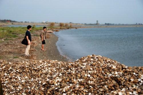 海邊堆滿了蛤仔殼,這是傾倒的垃圾還是海裡沖上來的屍體?